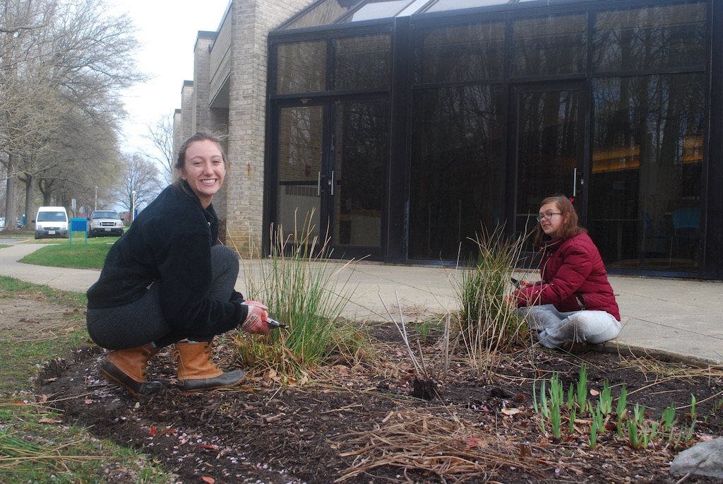 Political+science+major+Piper+Lewis+helps+to+maintain+one+of+the+many+rain+gardens+around+campus.