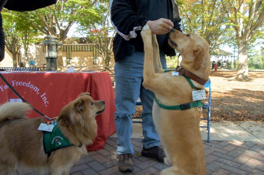 Students had the chance to play with therapy dogs throughout the festival.