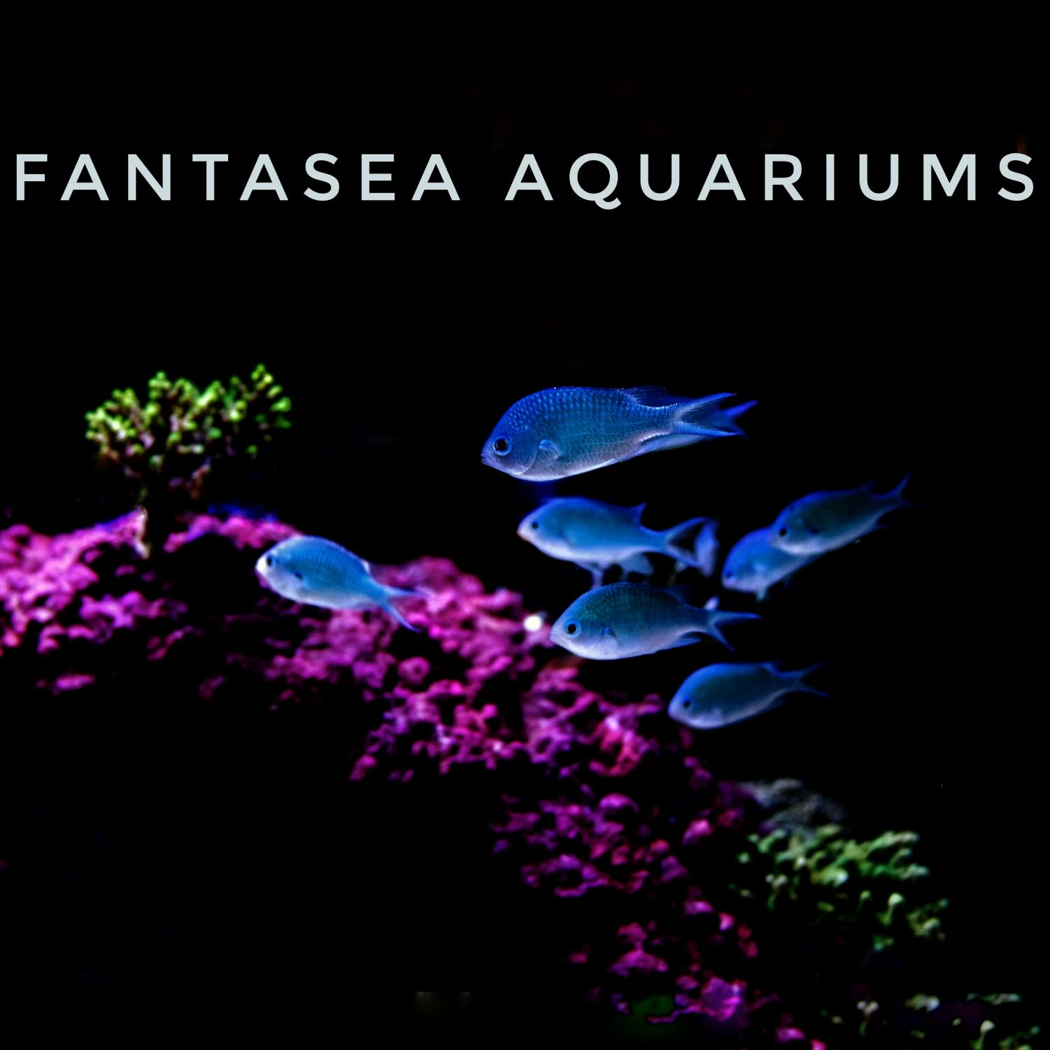 A fifth-year business student owns Fantasea Aquariums.