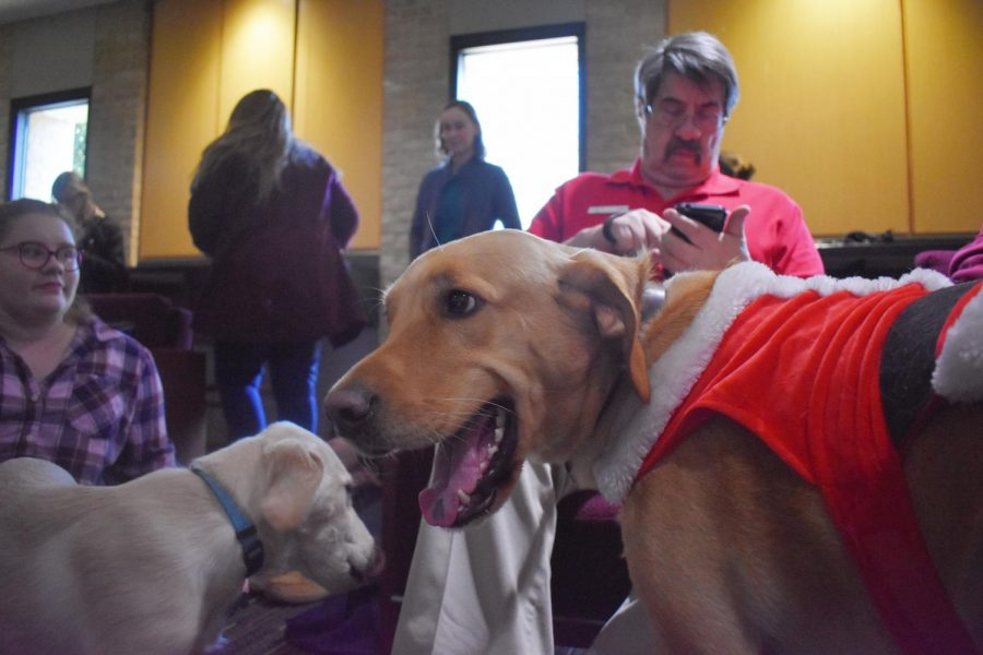 Active Minds hosts Fidos for Final, an event for students to interact with dogs to de-stress with finals.